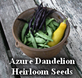 Azure Dandelion Heirloom Seeds